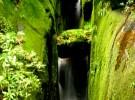 rain forest rio