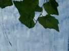 Dews and leaves on blue sky