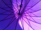 Violet and Lines
