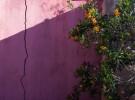 Wall and Bush