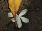 Symbol of Nature