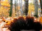 Détail de champignon et forêt - Mushroom detail and forest