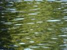 green reflection...