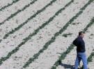 Farmer at Gozo/ Malta