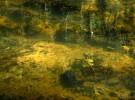 Feuilles dans la rivière - Leaves in the River