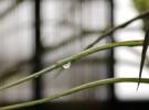 Reflection in the rain drop