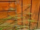 Green grass brown wall