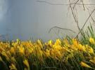 Waning Blossoms