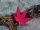 Autumnleave