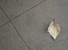 leaf on damp sidewalk