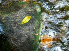 leaf, stone and river