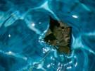 Leaf in the pool